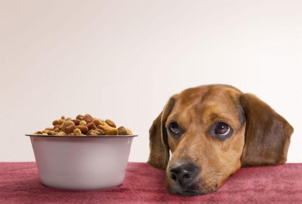 10 cose da non fare a un cane