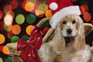 regali per cani natale