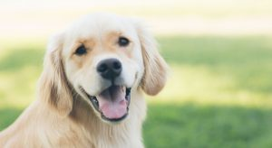 alitosi cane