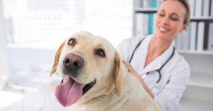 sterilizzare il cane