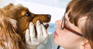 igiene orale nei cani